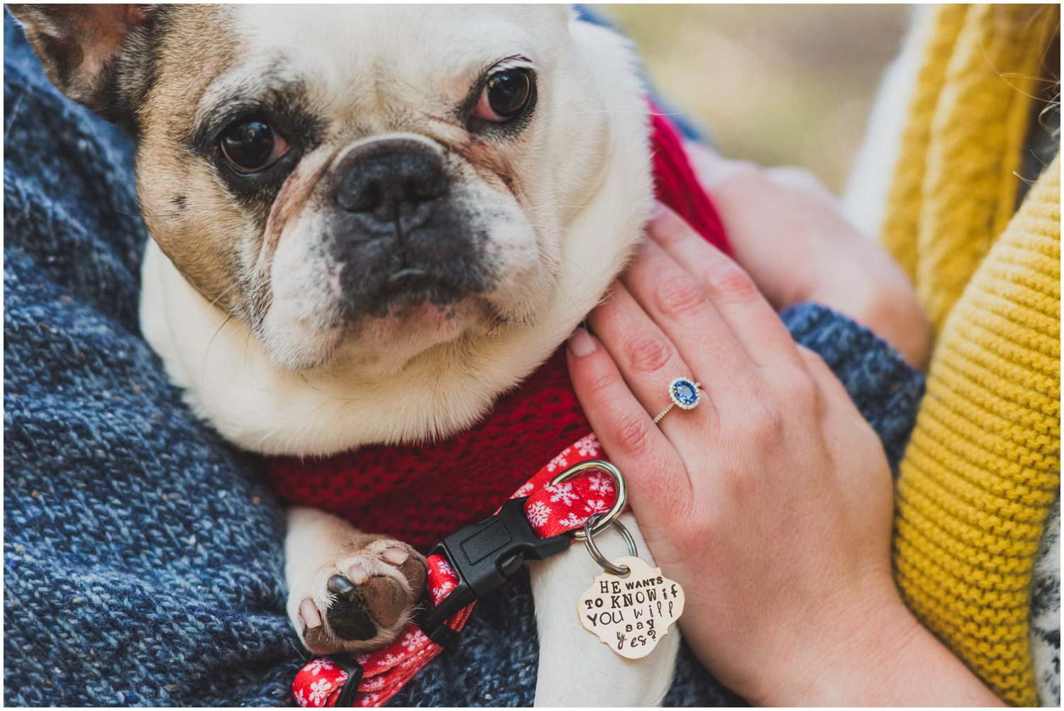 he wants to know if you'll say yes tag on dog collar for proposal with blue sapphire engagement ring